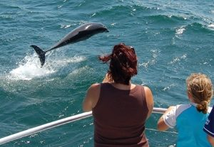 Jervis Bay dolphin watch